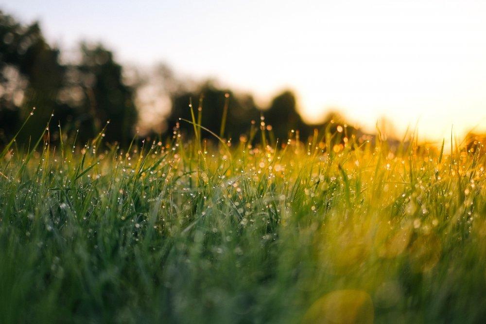 Gräset är grönare hemmavid